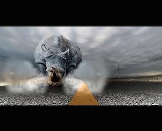 rhinoceros chaos