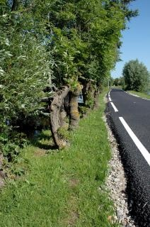 道路、農地