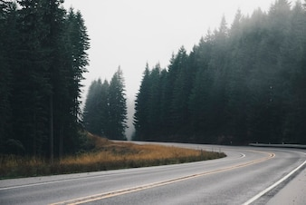 Road curve and trees