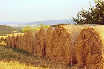 Rolls of hay on field