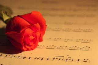 rose and music