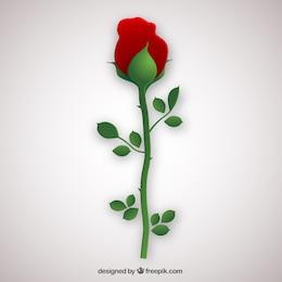 Rose in flat design