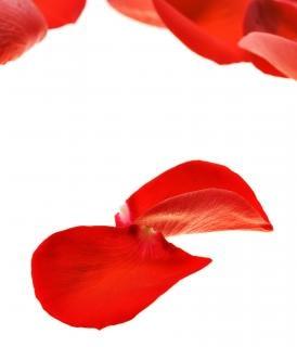 how to buy fresh rose petals