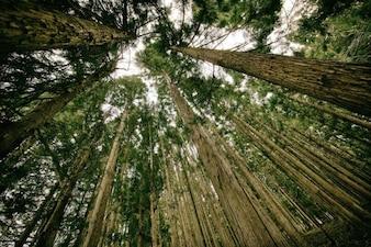 木々に丸め
