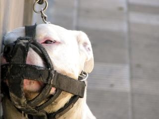 Sad Dogo