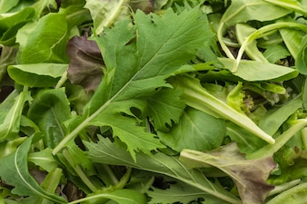 Salad mix with rucola, frisee, radicchio and lamb's lettuce