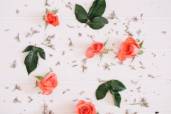 Salmon roses and green leaves on white wooden table