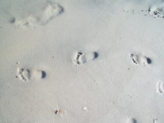 Sandy feet  feet