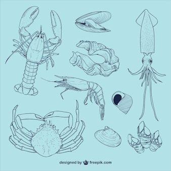 Sea life illustrations