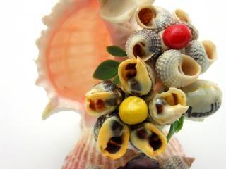 Sea-shell figure, beauty