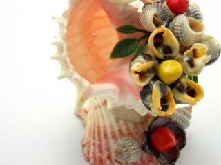 Sea-shell figure, design