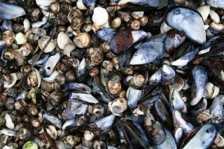 Sea shells, pile