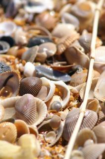 Sea shells, smashes