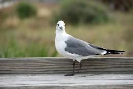 Seagull, Florida, 2007