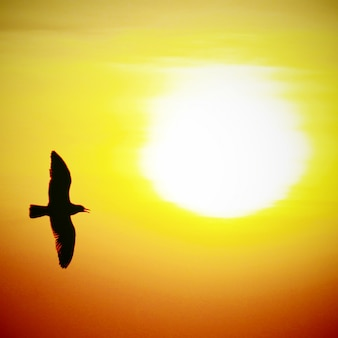 Seagull on sunset background with retro filter effect