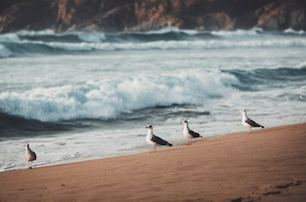 Seagulls on the shore of a beach