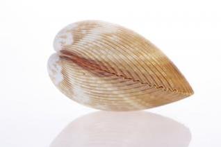 Seashell , environment