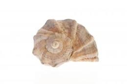 seashell   life