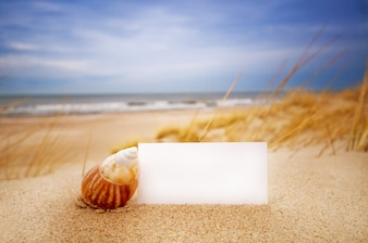Seashell with a blank business card