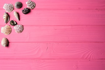 Seashells on pink wooden background