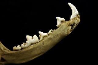 Sharp teeths, dark