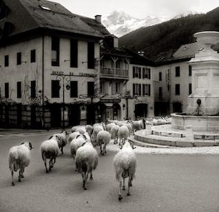 sheep in old french village