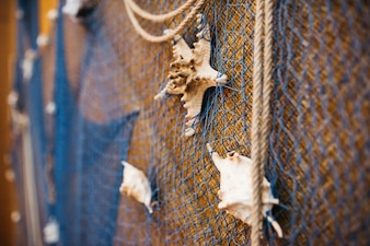 Shell put on the rope and net on the wall as part of dinner hall decoration