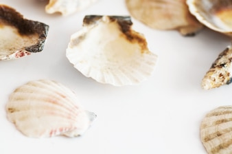 Shells close