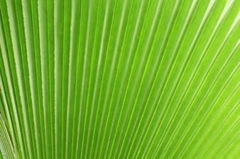 Shining green leaf palm tree texture