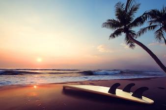 夏の日没の熱帯のビーチでのシルエットサーフボード。日没の夏のビーチとヤシの木の風景。ヴィンテージ色調
