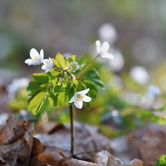 Small blooming plant