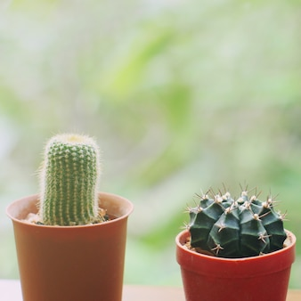 Small cactus for decorated with retro filter effect