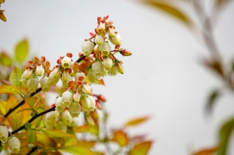 Small flower buds