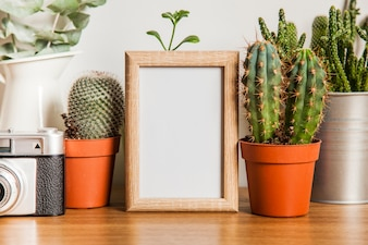 Small frame and cacti