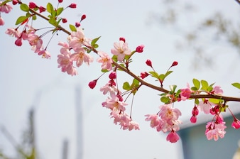 Small pink flowers in a branch