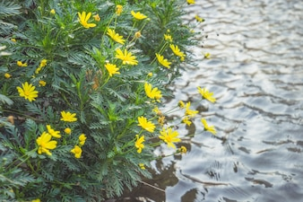 Small yellow flowers growing by the river
