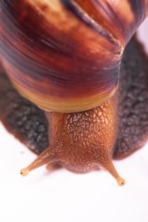 snail  closeup