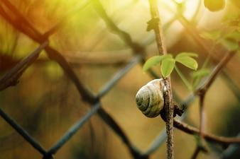 Snail climbing a branch