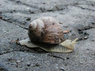Snail, lazy