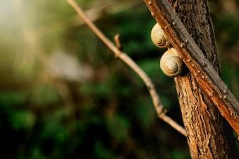 Snails climbing a branch