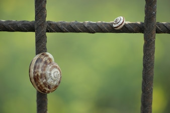 Snails in iron bars