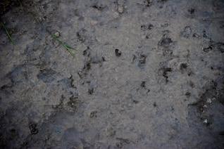 soil surface texture