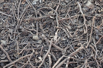 Soil with dry tree branches