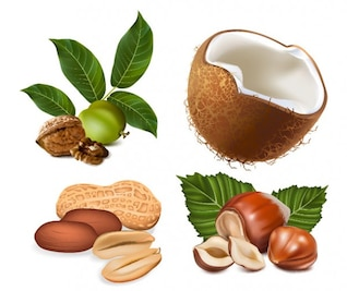 some nuts vector