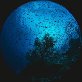 Sphere aquarium in a tank of fish