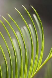 spiky leaf