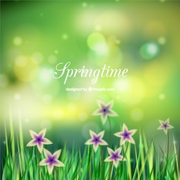Spring field background