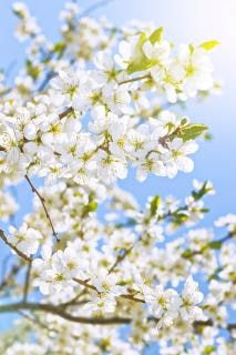 spring flowers  flowers  nobody