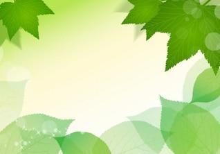 spring fresh green leaves vector illustration