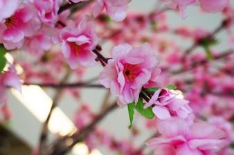 Spring pink plastic sakura flower decorating a garden.